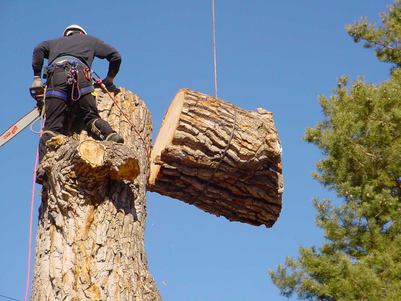 Tree Removal | Top Lawn Care