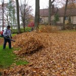 fall-leaf-cleanup