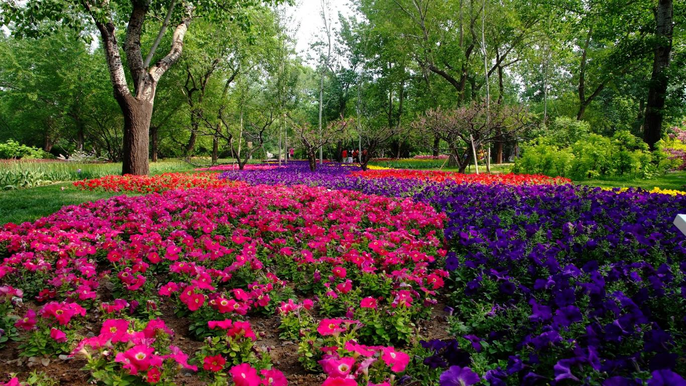 Flower installation top lawn care for Flower garden designs