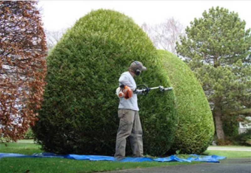 Bush hedge trimming top lawn care for Materiel de jardinage wolf